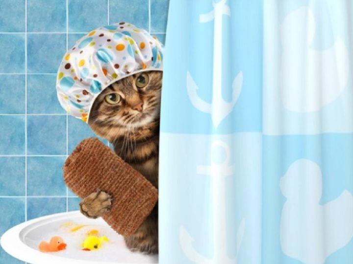 Banho em Gatinhos, Gatos e Gatões