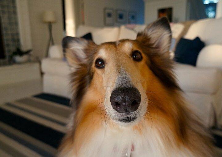 Pets em apartamentos: Dicas